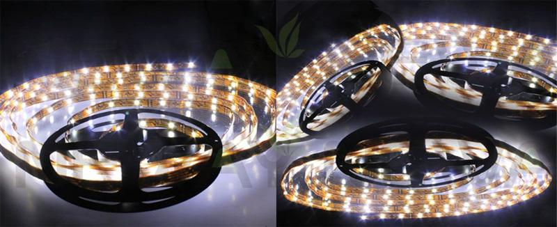 60 LEDs/M Waterproof LED Flexible Strip 3528 Pictures